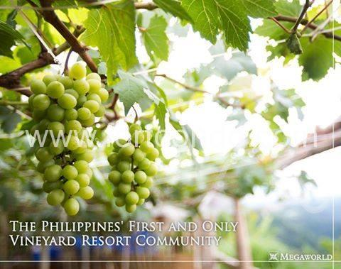grape-vineyard-tagaytay-twinlakes-condos-for-sale